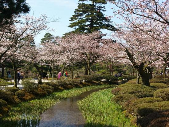 KANAZAWA : le jardin Kenroku-en pendant le sakura