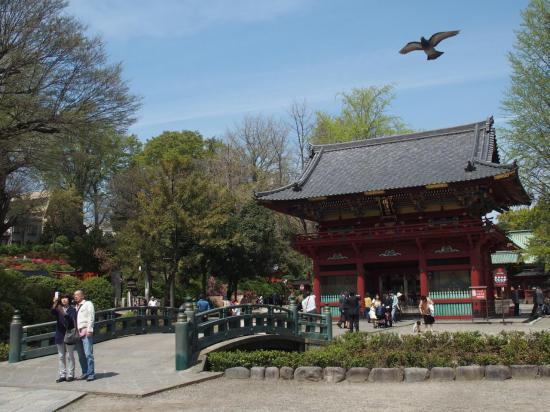 TOKYO : l'entrée du sanctuaire NEZU