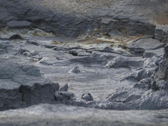 Bulles de boue grise à Namaskard