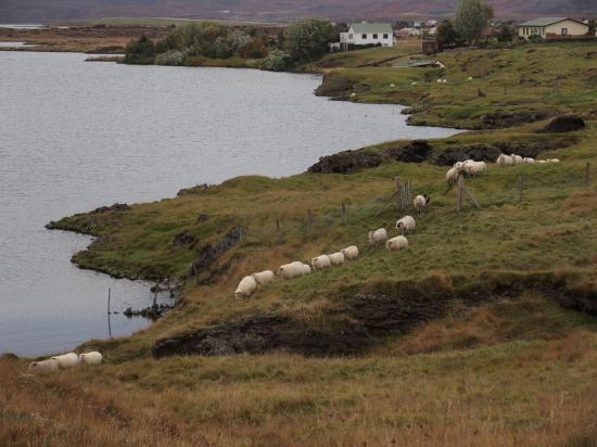 Des moutons à la queue leu-leu