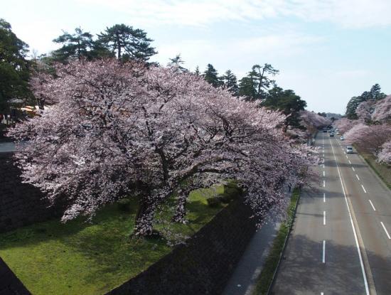 Rue à 2x2 voies bordée de cerisiers