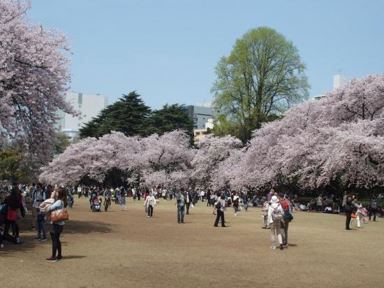 Le magnifique jardin SHINJUKU-GYOEN