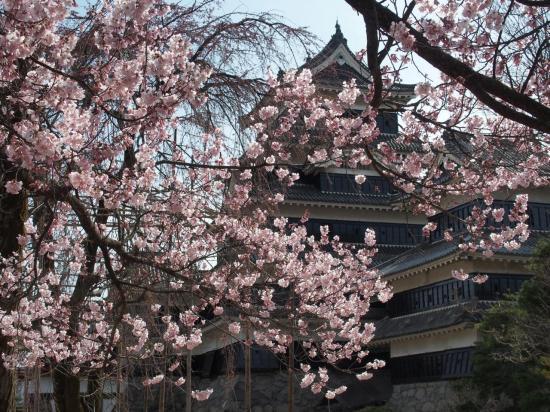 Dans le jardin du château de MATSUMOTO