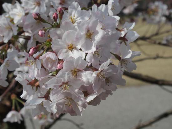 Fleurs blanches et boutons roses ensemble.