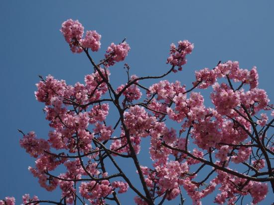 . . . ce qui donne des arbres vraiment roses