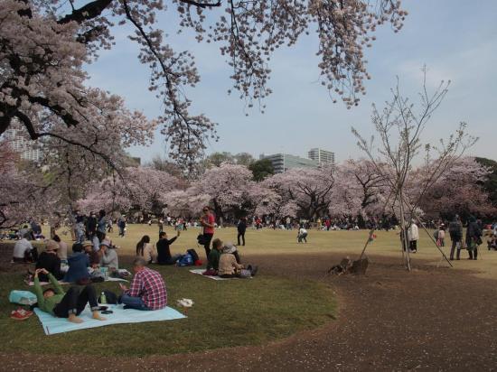 Les japonais s'installent sous les frondaisons