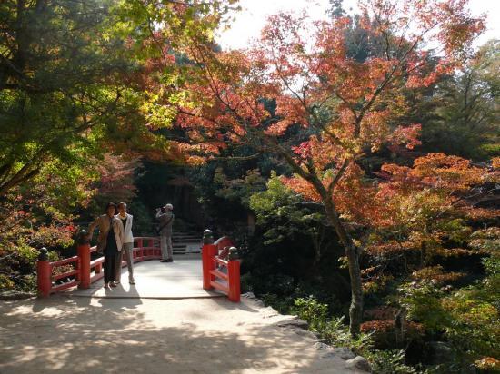 Feuilles d'automne dans le parc MOMIJIDANI.