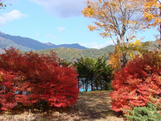 Magnifiques feuillages rouges et oranges au lac KAWAGUCHIKO.