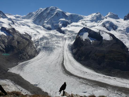 Les chocards à bec jaune admirent les glaciers