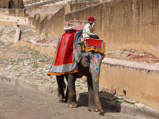 Fort d'Amber : les éléphants sont décorés
